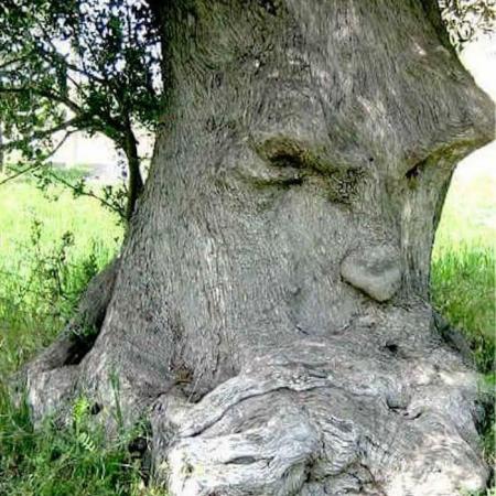 «Au bonheur des arbres» / Edition Terre Vivante
